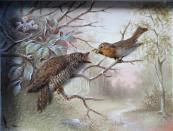 J. Schroll - Cuckoo and Robin