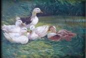 Josef Pavelka - Ducks