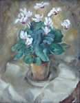 Peter P. Matysek - Cyclamen in flower pot