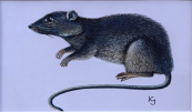 Jan Kudlacek - Rat