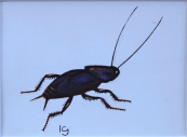 Jan Kudlacek - Beetle