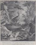 Johann Elias Ridinger - Bird Garden
