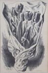 Cyril Bouda - Tulips